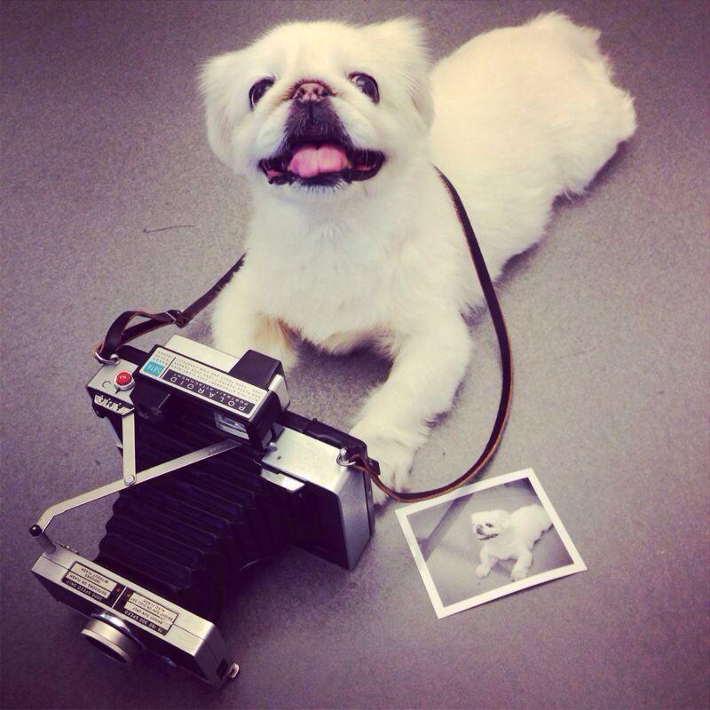Terry's Polaroid Land 250